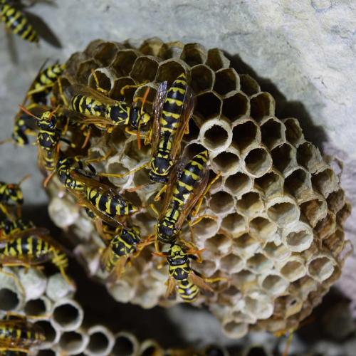 wasp nest removal milton keynes
