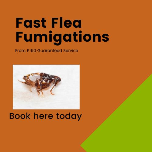 Flea Fumigations Buckinghamshire